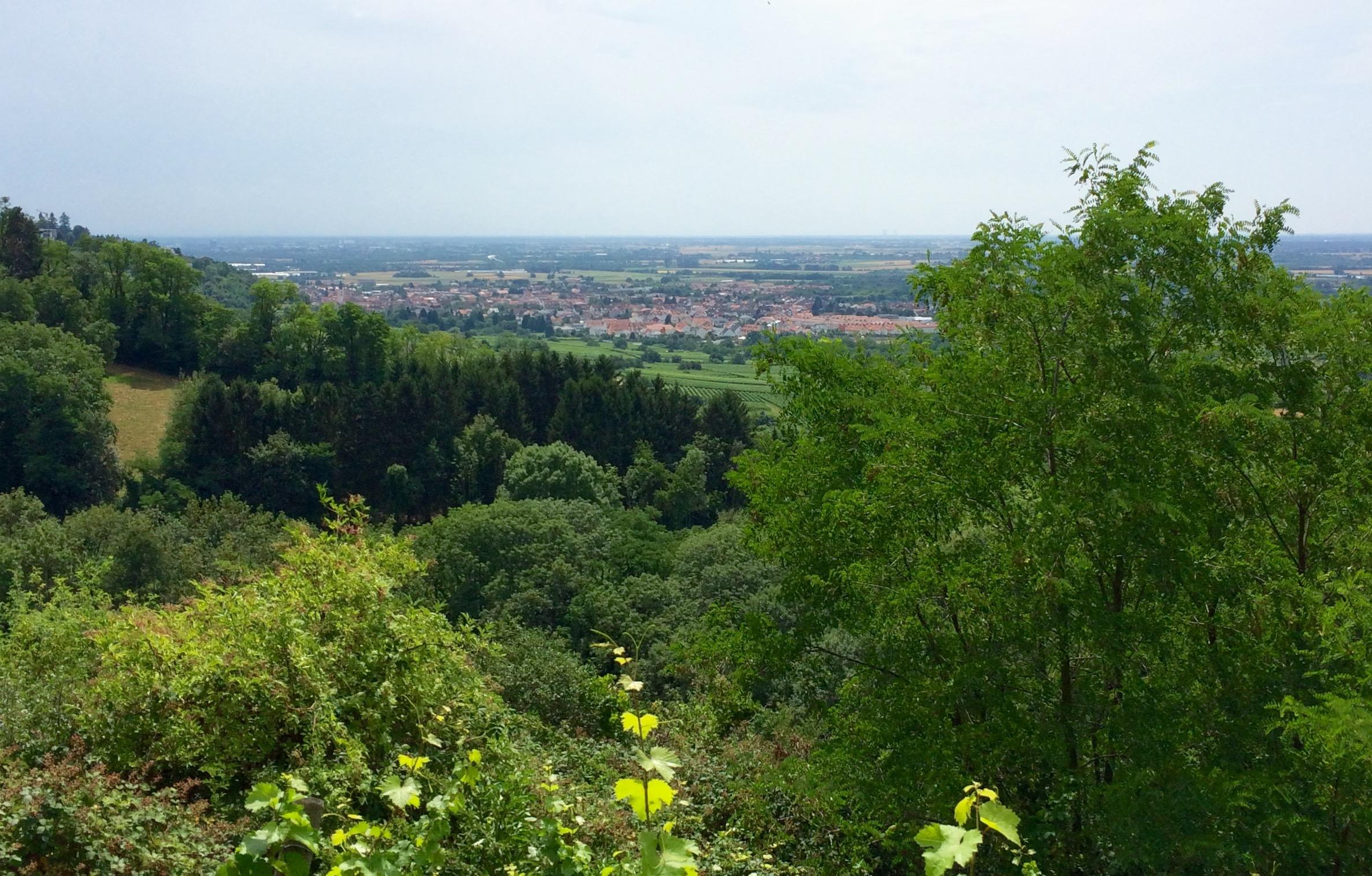 Hunderunde mit Blick Richtung Philippsburg
